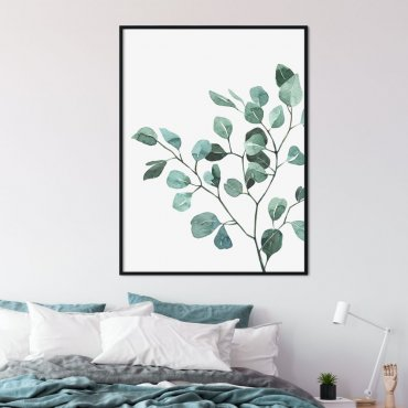 plakat eucalyptus