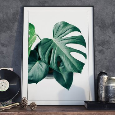 Plakat w ramie - Real Monstera