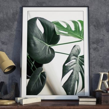 Plakat w ramie - Photo Monstera