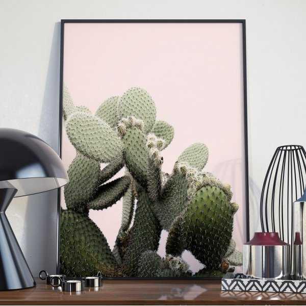 Plakat w ramie - Pink Cacti