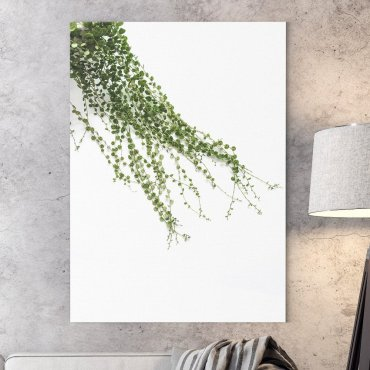 Obraz na płótnie - MINIMAL PLANTS