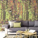 Tapeta na ścianę - RAINBOW SPLASH