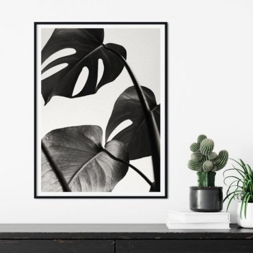 Plakat w ramie - MONSTERA NIGHT