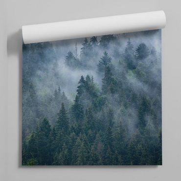 foggy forest tapeta z lasem