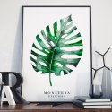 MONSTERA - Plakat w ramie