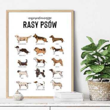 plakat rasy psów