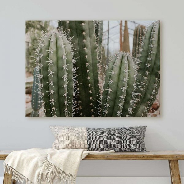 obraz miracle cactus