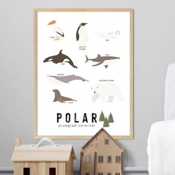 plakat edukacyjny polar